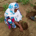 In Niger, women are learning how to grow their own