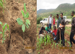Tree planting for planned comparisons completed in Gursum