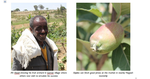Apples improve profits from rainwater in DryDev area
