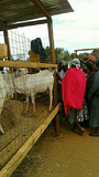 Goats and Chicken attract DRYDEV  farmers